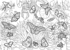 Vlinderkas