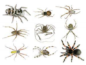Spinnen – Spiders