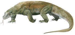 Komodovaraan – Komodo dragon