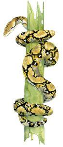 Netpython – Reticulated python