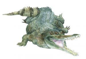 Onechte gaviaal – False gharial