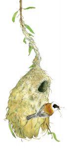 Buidelmees – Eurasian penduline tit