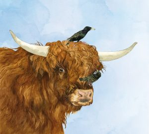 Schotse hooglander – Highland cattle
