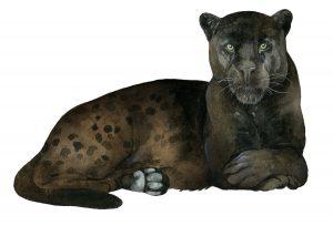 Jaguar – Jaguar